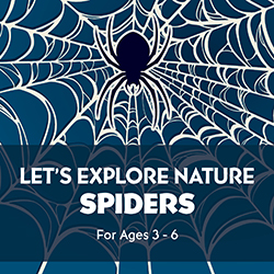 Let's Explore Nature: Spiders