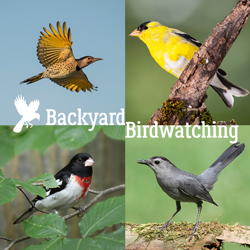 Backyard Birdwatching