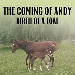 The Coming of Andy: Birth of a Foal