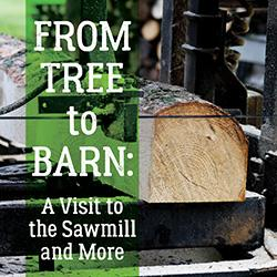 From Tree to Barn: A Visit to the Sawmill and More